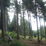 Volunteers Pulling Conifers